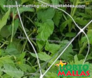 support net installed for trellis system in cropfield