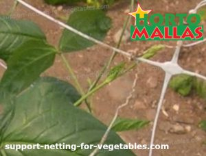 support net with vegetable crops