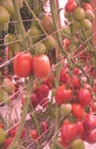 Support netting for vegetables